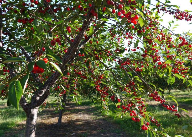 unnamed file 150 - Viết đoạn văn nghị luận: Ăn quả nhớ kẻ trồng cây có sử dụng câu đặc biệt, câu rút gọn và trạng ngữ