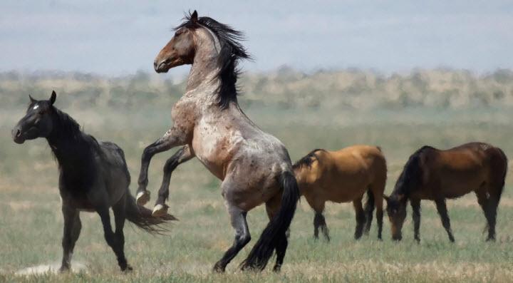unnamed file 167 - Chứng minh câu tục ngữ Một con ngựa đau cả tàu bỏ cỏ